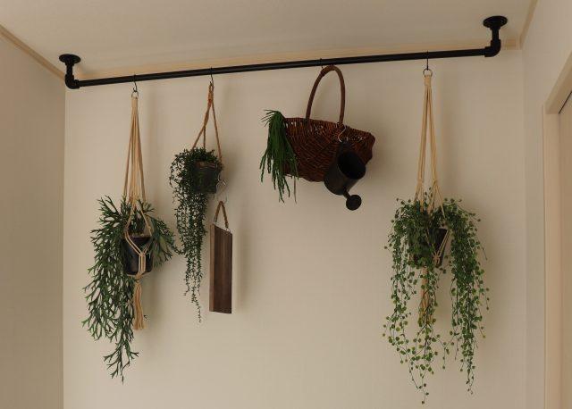 観葉植物ディスプレイとして活躍
